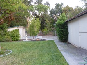 Our yard